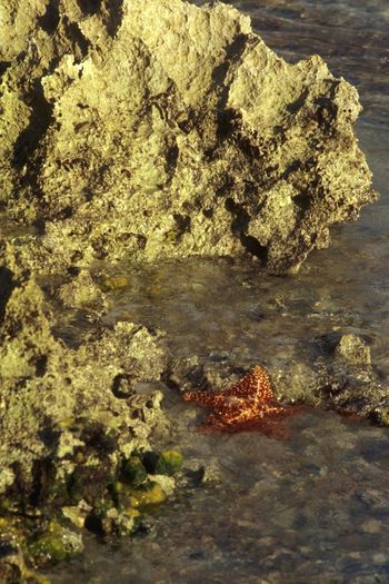 Starfish  Carribean Sea Rocks And Water Rock - Object Geology Nature Rock No People Physical Geography Day Outdoors Beauty In Nature Water