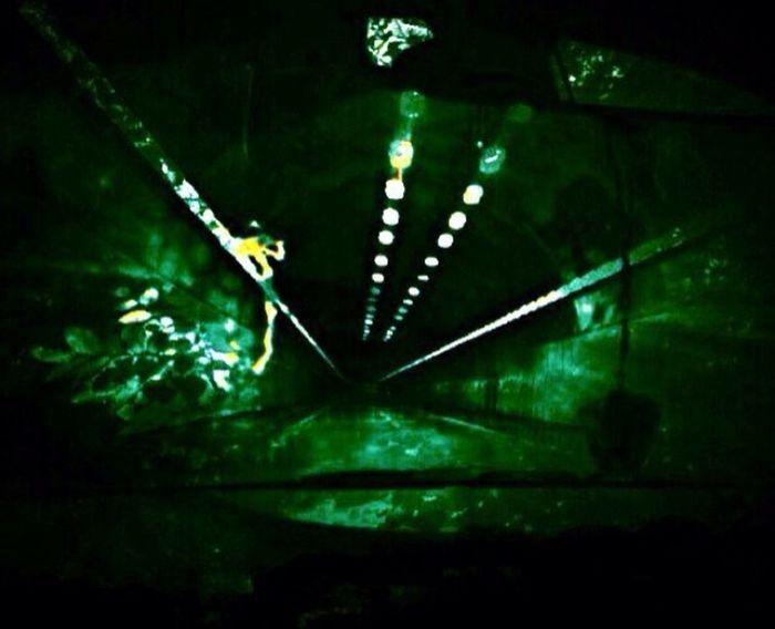 Thx For Invitation-Deep Woods Darlin Chosen Paths HDRphoto Night Photography