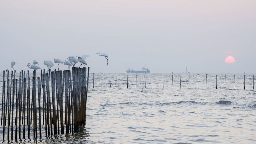 Seagull on wooden post in sea against sky during winter
