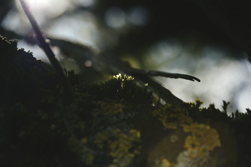 Softfocus Semi-macro Moss-covered Nature Photography Day In April Pol Filter Camera Practice Sun Reflection Happiness