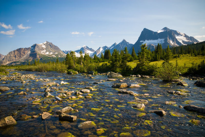 Creek in Tonquin Valley in Jasper National Park, Canada Backcountry Beauty In Nature Canada Creek Forest Hiking Jasper Jasper National Park Landscape Meadow Mountain Mountain Peak Mountains Nature Outdoors Rocky Mountains Scenics Sky Stream Summer Tonquin Valley Travel Tree Water Wilderness
