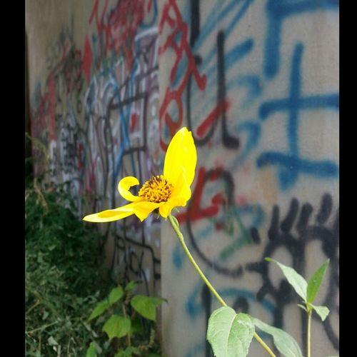 Graffiti Flower Nature Elkriver