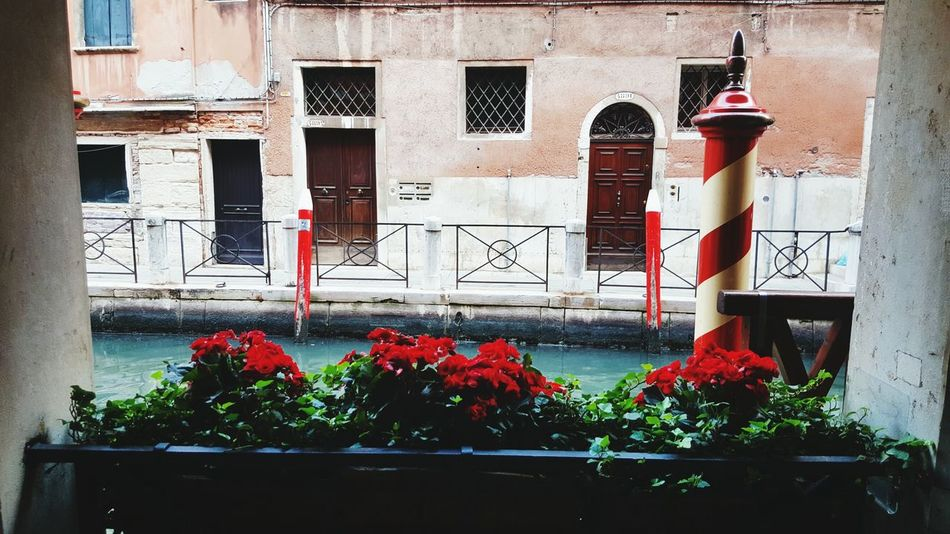 Flower Architecture Potted Plant Building Exterior Red Venice Canals Barber Pole