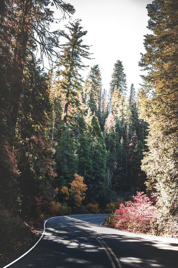 Scenic mountain region comprising the Sierra Nevada Range & Yosemite Valley of the Merced river; famous for giant sequoias, huge rock domes & peaks. Yosemite National Park Beauty In Nature Day Growth Nature No People Outdoors Road Scenics Sky The Way Forward Tranquility Transportation Tree