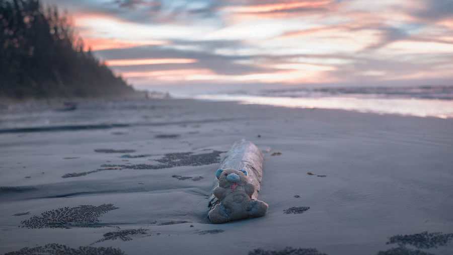 Teddy bear by driftwood at beach during sunset