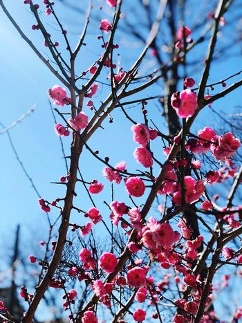 Spring Tree Branch Plant Beauty In Nature Growth Flower Freshness Blossom Sky Red Nature Day Pink Color Close-up No People Springtime Vulnerability  Flowering Plant Fragility Low Angle View