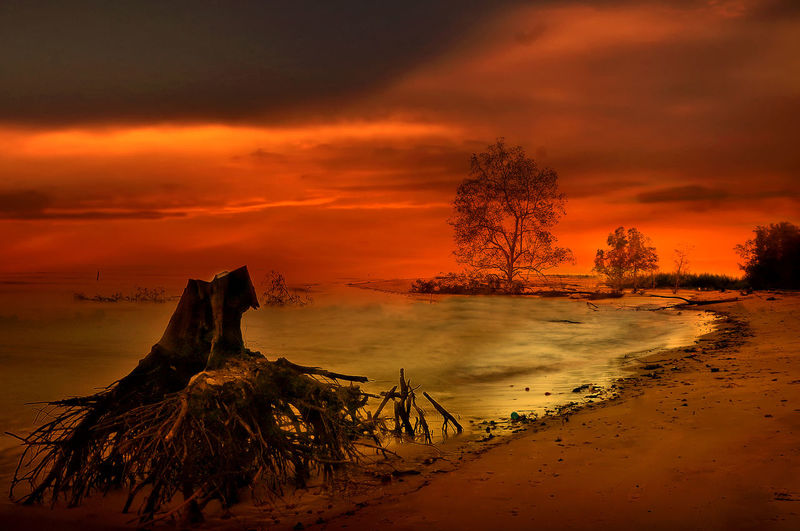 sunset at Tanjung beach Sky Sunset Water Tree Cloud - Sky Beach Land Beauty In Nature Sea Scenics - Nature Tranquil Scene Nature Tranquility Orange Color Plant No People Idyllic Outdoors Power In Nature Sunset Beach Tree Sunset