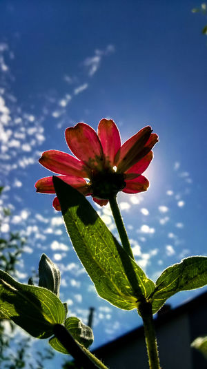 Beauty In Nature Blooming Blossom Botany Bud Close-up Colour Of Life Day Flower Flower Head Focus On Foreground Fragility Freshness Growth In Bloom Leaf Nature No People Petal Plant Pollen Red Sky Stamen Stem