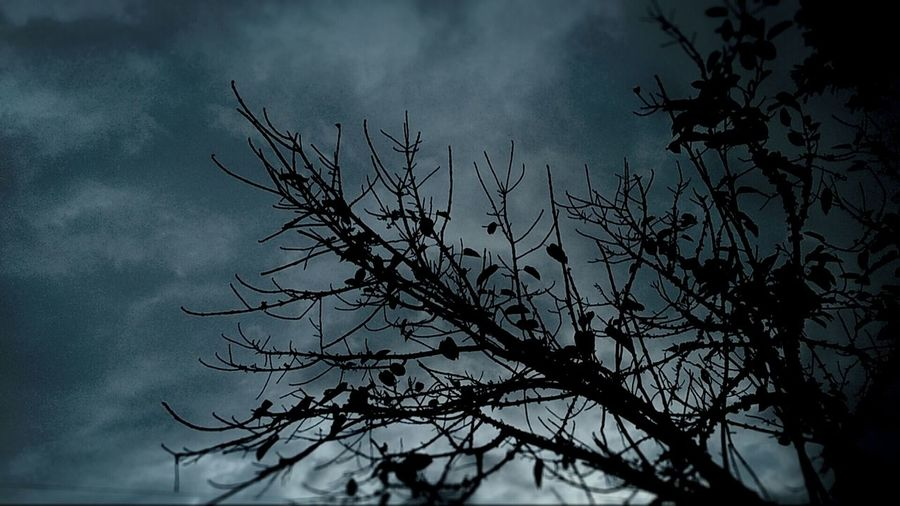 Greyskies Tree Silhouette Fallen Leaves Xperiaphotography