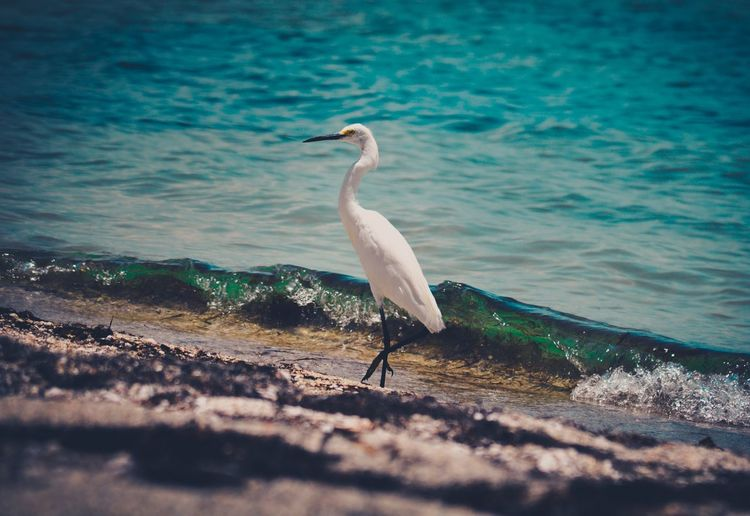 """In motion"" Nature EyeEm Best Shots Vintage Birds"