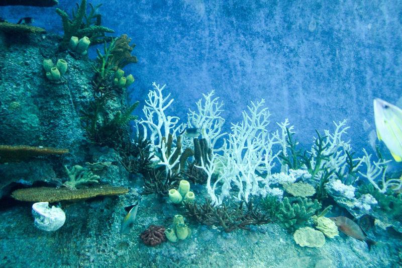 Rocks in calm blue sea