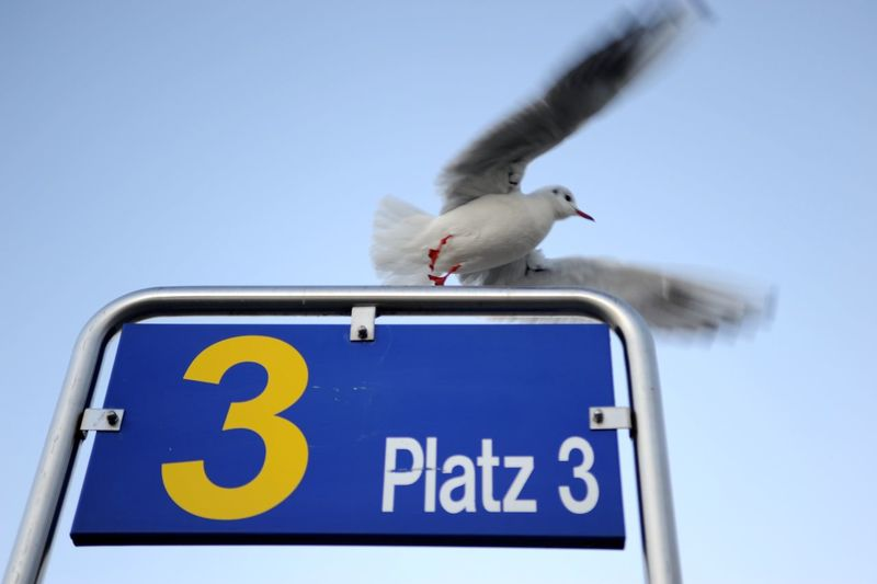 Low angle view of seagull flying against clear blue sky