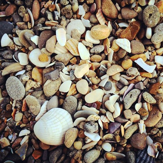 Life Is A Beach Beachphotography Shells Send Holidays France Southoffrance Nature