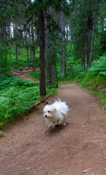 Dog running on road in forest