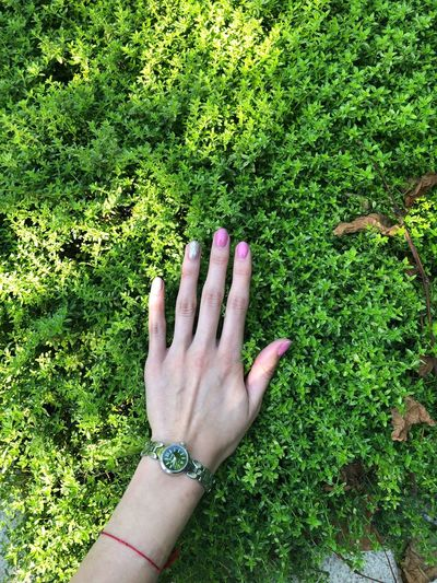 Cropped image of woman hand touching plant