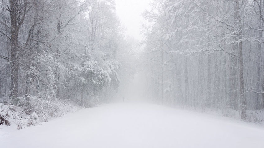 whiteout Blizzard 2018 Freezing Hiking Lonely Lonelyness North Carolina Beauty In Nature Blizzard Cold Temperature Day Forest Frigid Landscape Nature Outdoors Snow Snowflake Snowing Tranquility Tree Umstead State Park White Color Winter