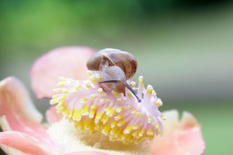 snails, snails over yellow flowers Animal Animal Themes Animal Wildlife Beauty In Nature Close-up Flower Flower Head Flowering Plant Focus On Foreground Fragility Freshness Growth Inflorescence Invertebrate Nature No People Outdoors Petal Pink Color Plant Pollen Selective Focus Vulnerability