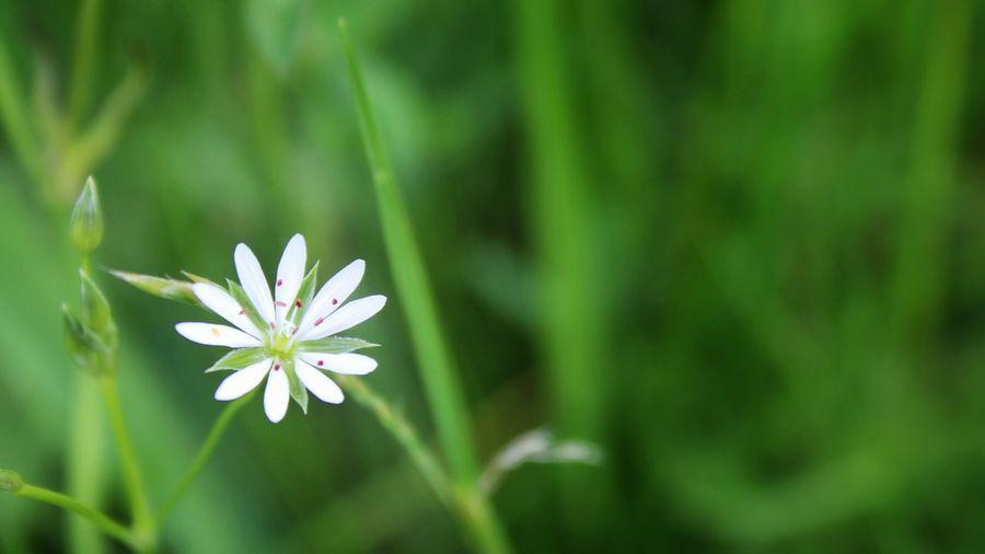 So delicate EyeEm Gallery Tadaa Community Beauty In Nature EyeEm Best Shots Eye4photography  Wildflower