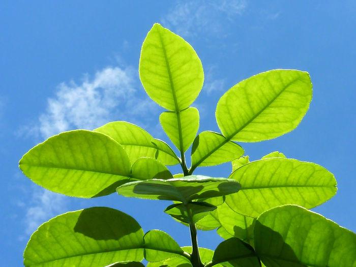 Eco Friendly Ecology Energy Saving Environmental Care Environmental Friendly Green Color Green Leaves Leaf