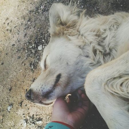 Billy *--* Dog