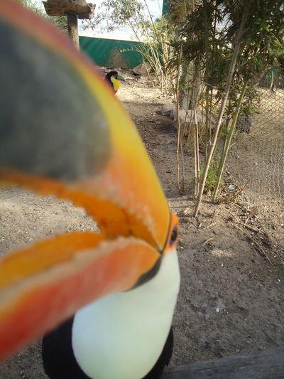 Close-up of orange crab on field