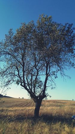 Trees Nature Outside Alentejo Vacation Hot Day Desert
