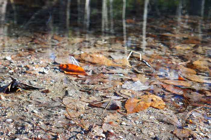 Autumn Bank Close-up Fallen Focus On Foreground Ground Leaf Leaves Muddy Nature Not Beautiful Outdoors Pond Pond Life Reality Reflections In The Water Reflections Of Trees In Water Rotten Rotting Selective Focus Showing Imperfection Stream Twig Perspectives On Nature