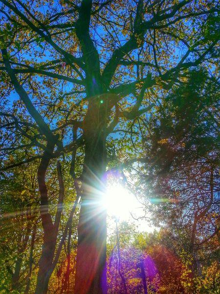 Hope everyone has a wonderful Treegasmic Tuesday Hugging A Tree TreePorn Tree And Sky