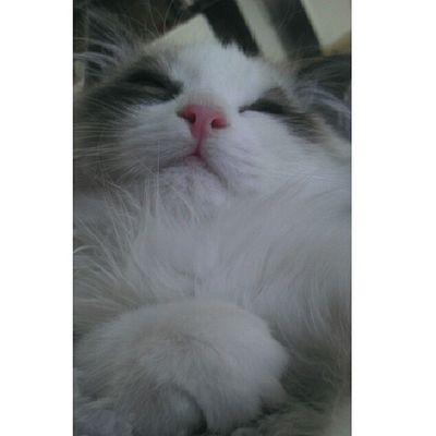 Primer plano sobando Srenrique Cat Cats Catstagram instacat durmiendo sleep