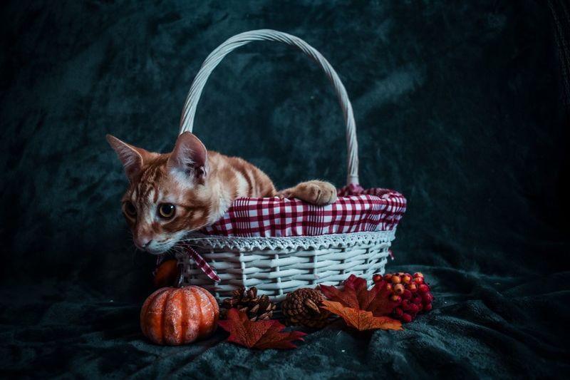 Portrait of a dog in basket