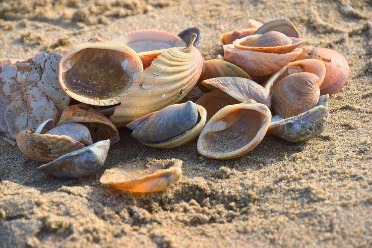 Clamshells Shell Land Sand Beach Nature Sunlight Animal Wildlife Animal Shell Close-up Seashell High Angle View Still Life Beauty In Nature Sea Animals In The Wild Food Fragility Focus On Foreground Selective Focus Food And Drink Animals In The Wild Outdoors
