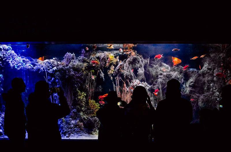 Rear view of people in aquarium