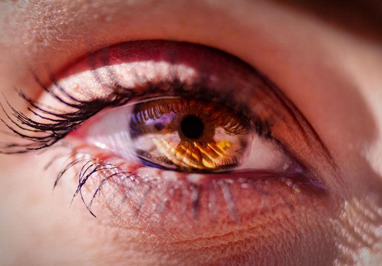 Macro of an eye