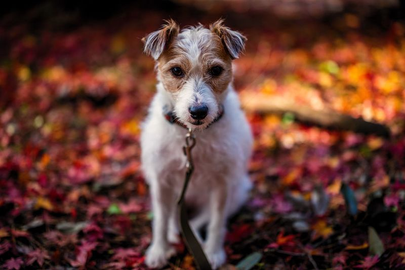 Close-Up Portrait Of Dog On Field During Autumn
