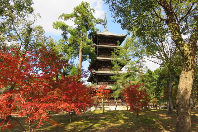 京都 紅葉 Kyoto,japan 日本 仁和寺 五重塔 Architecture Autumn Beauty In Nature Branch Building Exterior Built Structure Day Growth Leaf Low Angle View Nature No People Outdoors Religion Sky Tree Spirituality Place Of Worship