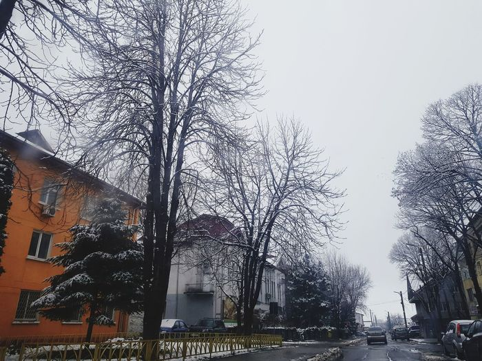 Minimalist The Graphic City Low Angle View Wet Tree Sky Outdoors No People Day Building Exterior Architecture Nature