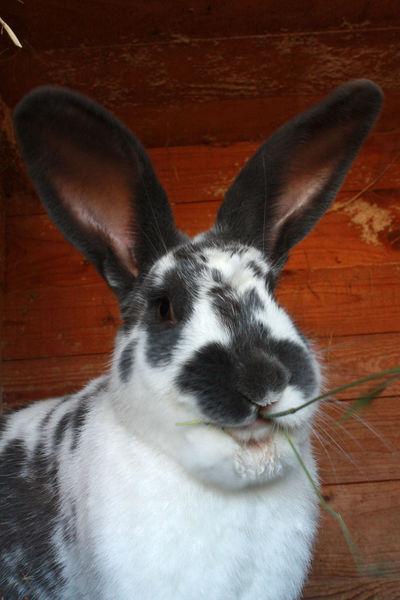 Blackandwhite Focus On Foreground Hase Haustier Kaninchen Säugetier Süss