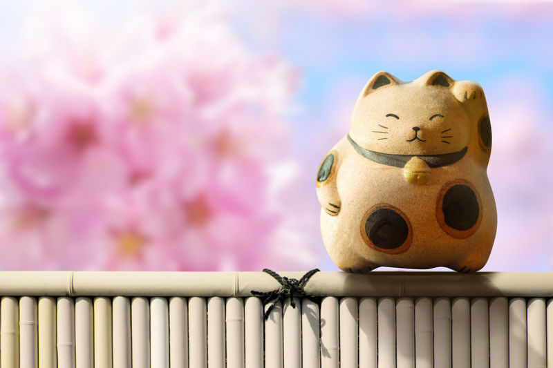 Japan Maneki Neko or beckoning cat, mascot of lucky and money, Present over pink cherry blossom sakura and bamboo fence Bamboo Beckoning Cat Cherry Blossoms Fence Healthy Japan Lucky Manekineko Mascot Money Sakura Welcome Wellness