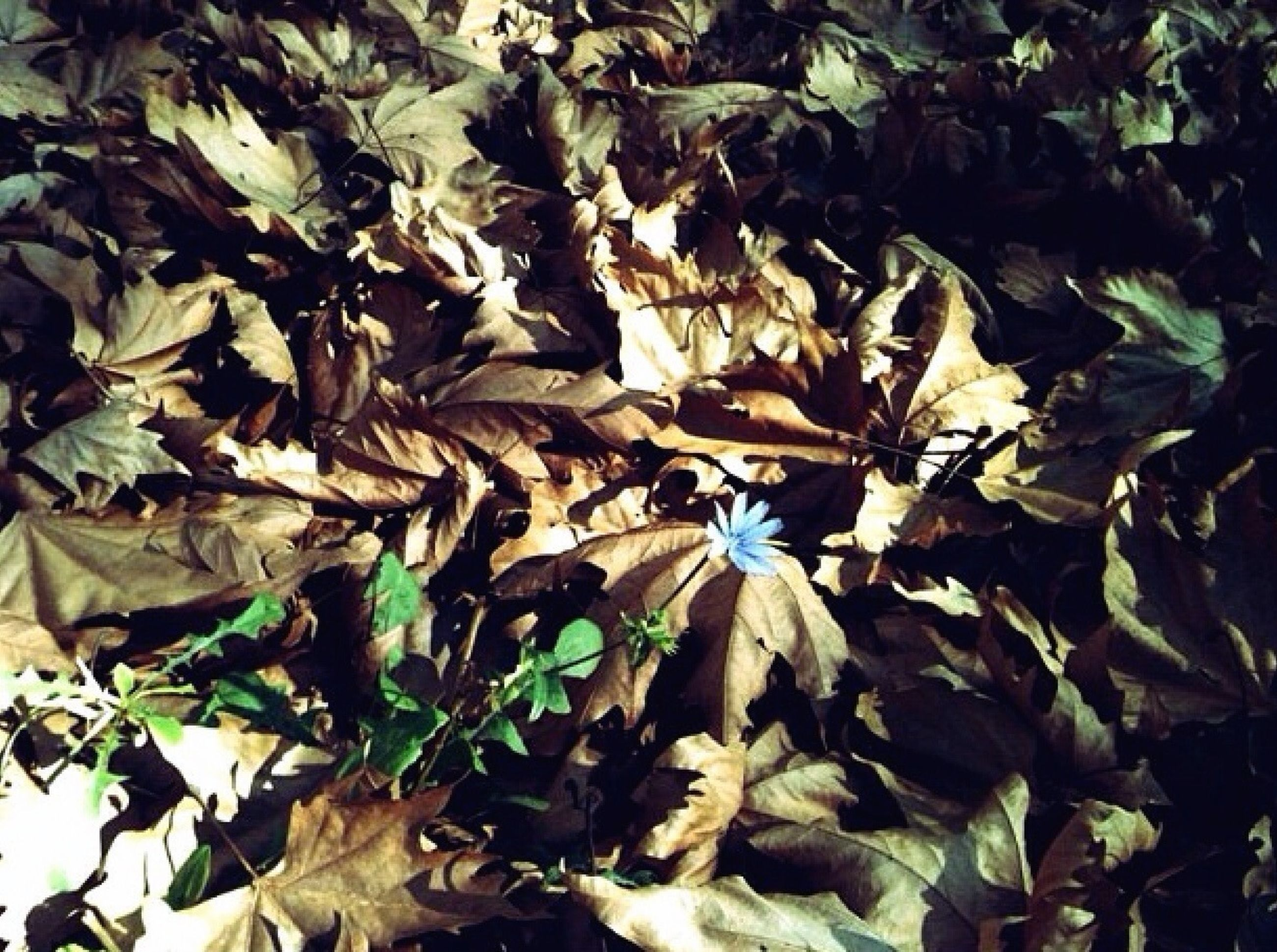 leaf, growth, nature, fragility, plant, high angle view, beauty in nature, freshness, leaves, flower, close-up, green color, field, no people, day, petal, outdoors, season, dry, abundance