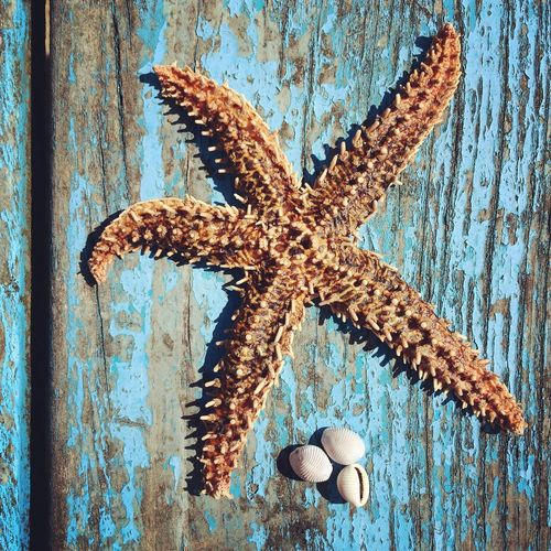 Directly Above View Of Starfish