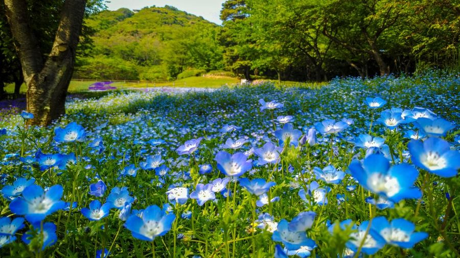 Cute flower Plant Flowering Plant Flower Growth Beauty In Nature Tree Freshness Nature Blue Springtime Outdoors Green Color