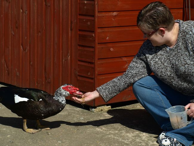 Feeding the duck Animal Themes Bird Cabin Day Duck Feeding  Muscovy Duck One Animal One Person People Pets Sitting Smallholder Smallholding Woman