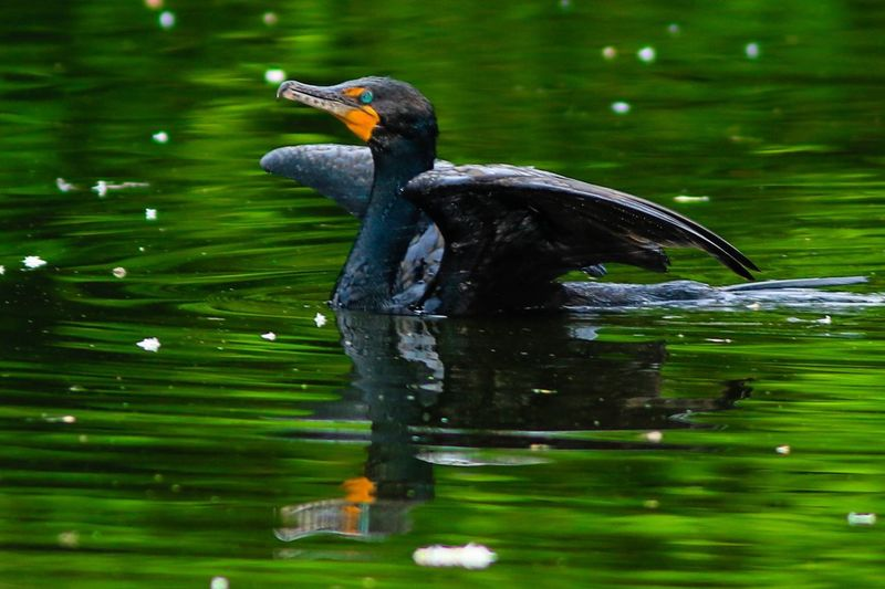 Wildlife Nature
