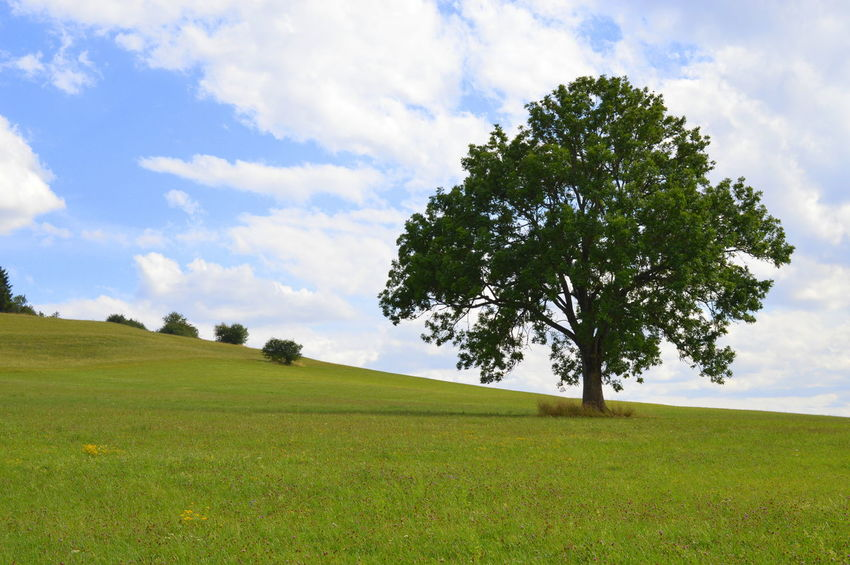 Deutschland EyeEm Nature Lover EyeEmNewHere Beauty In Nature Blue Sky Cloud - Sky Day Field Germany Grass Green Color Growth Landscape Meadow Nature No People Olefingirl Outdoors Scenics Sky Springtime Tranquil Scene Tranquility Tree