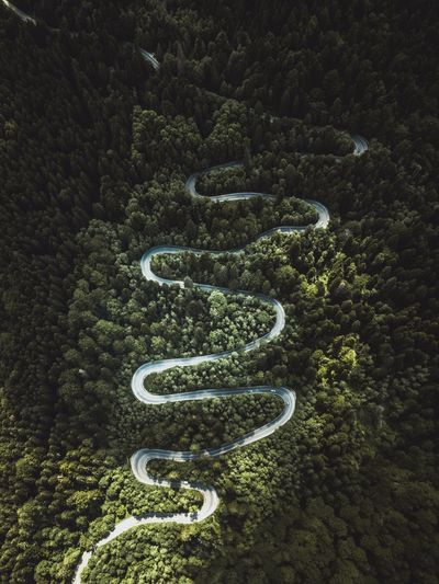 Beautiful Curve Evergreen Tree Green Color Road Transportation Aerial Photography Aerial View Beauty In Nature Connection Environment Foliage Forest Green Color Growth High Angle View Landscape Lush Foliage Nature Outdoors Plant Road Sign Tranquility Tree Winding Road The Great Outdoors - 2018 EyeEm Awards
