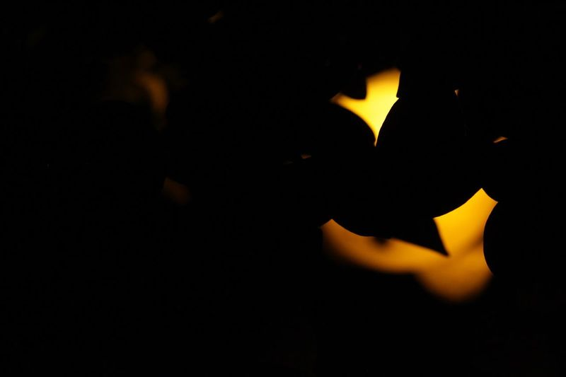 Dark Nature Day No People Light Glowing Glimmer Illuminated Lighting Equipment Close-up Flame Burning Studio Shot Black Background Darkness Lit Darkroom Full Frame Candlelight Love ♥ EyeEm Gallery EyeEm Best Shots Camera EyeEm Nature Lover Daylight