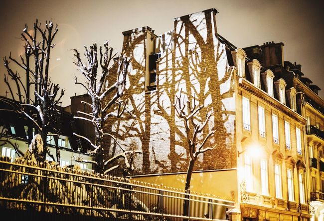 Q Winter Trees Winter Mood 8eme Arrondissement Shadow And Light Shadows & Lights Beauty In Nature Paris By Night The Week on EyeEm Night Photography Night Photography Paris Winter Winter In Paris Tree Shadow Night Shadows No People Outdoors