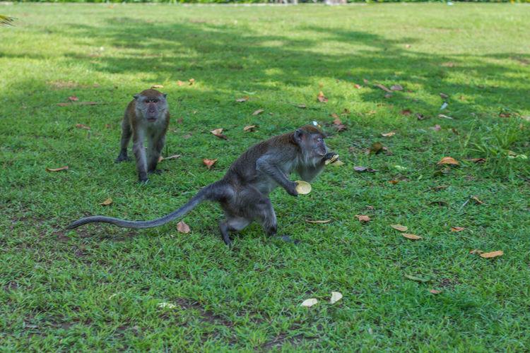 Monkeys feeding Feeding  Animal Wildlife Animals In The Wild Day Feeding Monkeys Grass Monkey Nature