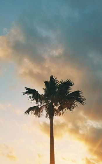 Low angle view of silhouette palm tree against sky at sunset