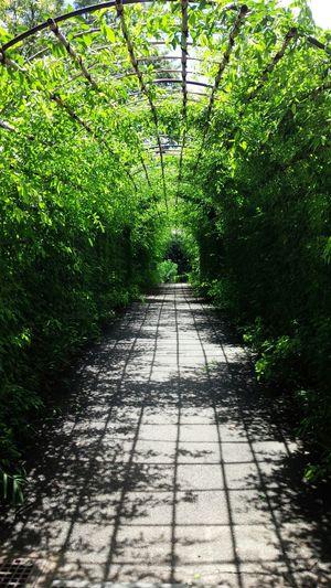 梅雨の晴れ間 ヒカリ 萩のトンネル 希望